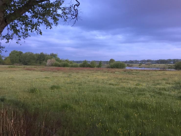 Landschap 6 mei 2019