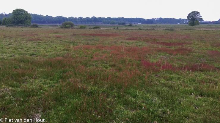 RL 17 mei zuring en grassen