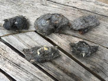 braakballen van ransuil